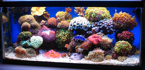 Nano Reef Tank - 5 Things You Need To Know