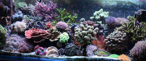 Saltwater Aquarium Selection Guide