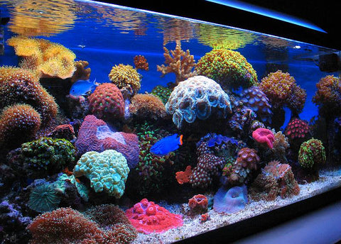 Nano Reef Tank - 5 Things You Need To Know ...