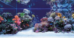 Aquascaping Saltwater Reef