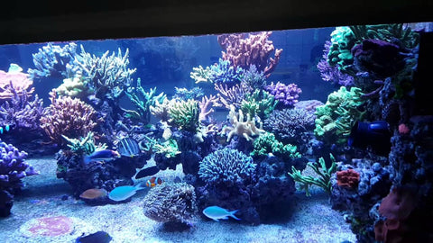 Aquatic Life T5 LED Hybrid Reef Tank