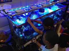 Children and Reef Tanks
