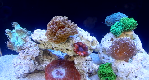 nano reef tank 5 things you need to know aquariumstoredepot