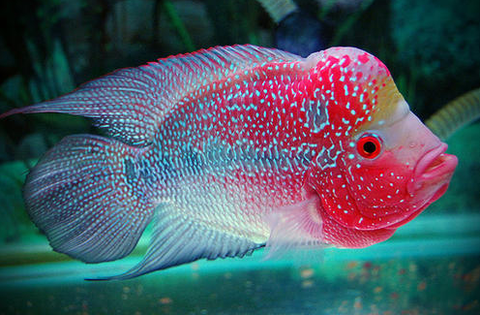 Exotic Freshwater Fish - Top 10 - AquariumStoreDepot