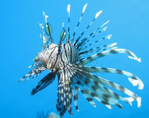 Beautiful Fish Top 10 Most Beautiful Saltwater Fish