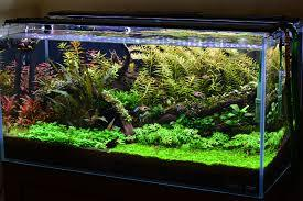 Low Light Planted Tank