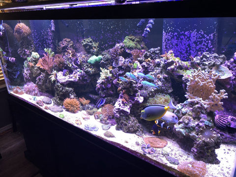 Reef Tank Running IC Pros
