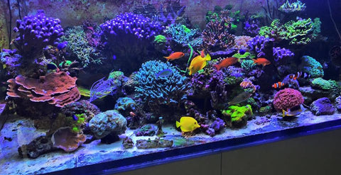 Saltwater reef tank 55 words of wisdom i wish i knew for What do you need for a fish tank