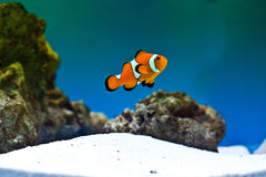 Selecting a Saltwater Fish