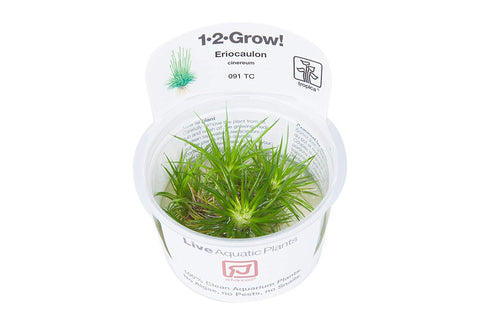Tropica Tissue Cultured Plants