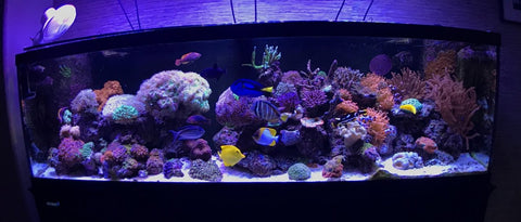 Viparspectra LEDs in Reef Tank