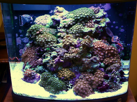 Nano Reef Tank 5 Things You Need To Know