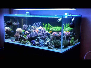 302 Aquatics Algae Turf Scrubber on SPS Dominant Reef Tank