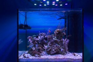 CoralVue AcquaSole Aquariums