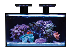 Innovative Marine 20 Gallon NUVO Fusion
