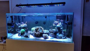"ASD LED Reef Lighting 48"" 300W Fixture - 4 to 6 Feet Tanks"