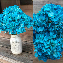 Hydrangeas - 5 bunches - Knot and Nest Designs