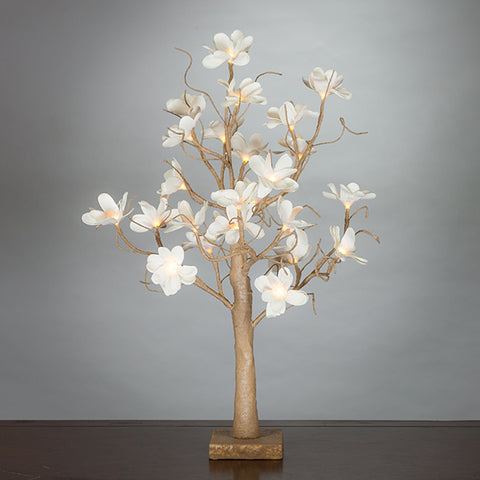 White Magnolia Tree