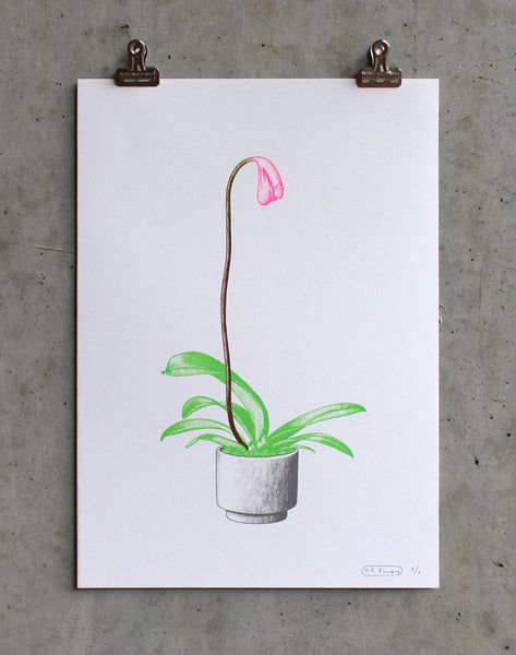 Cock Plant - Artist Proof