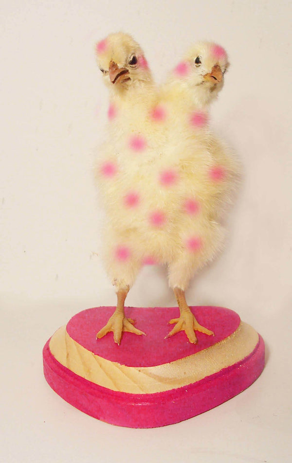 Two Headed Chick Taxidermy class by Divya || PAST EVENT ||