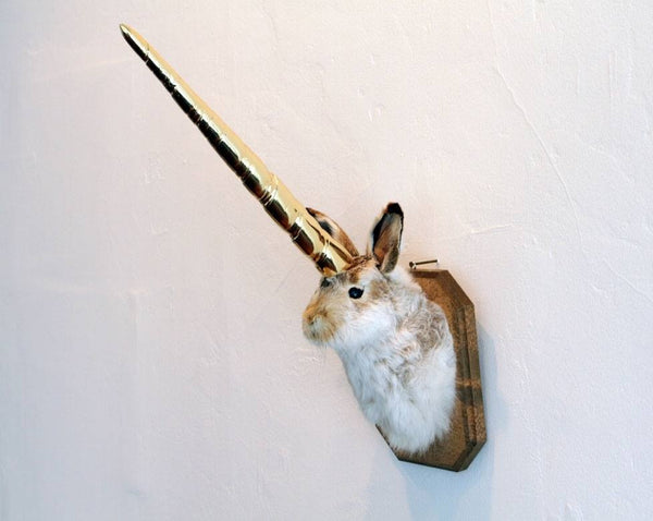 Rabbit & Jackalope Taxidermy Class by Divya || PAST EVENT ||