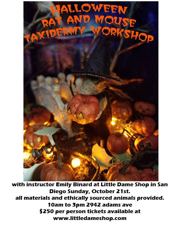 Taxidermy Workshop // Oct. 21, 2018