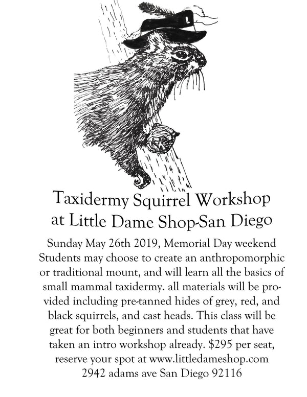 Taxidermy Workshop with Emily Binard// May26, 2019