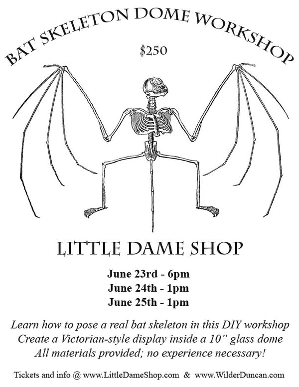 Bat Skeleton Dome Workshop || CANCELLED ||