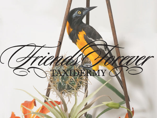 Taxidermy with Divay Anantharaman || PAST EVENT ||