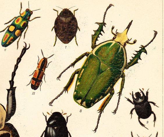 beginners entomology