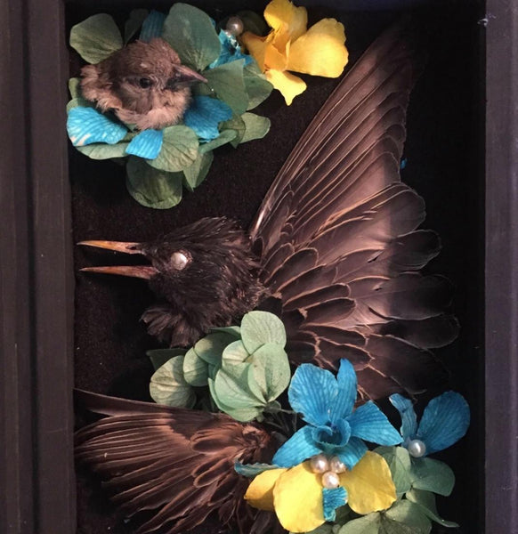 Natural History Shadow Box | Divya | Little Dame