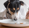 What Dogs Should and Should Not Eat
