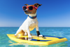 6 Tips on How To Prepare Your Dog For a Day Out On the Beach