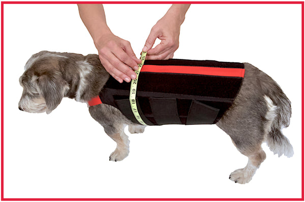 wiggleless dog back brace girth measuring guide for dogs with IVDD or back pain