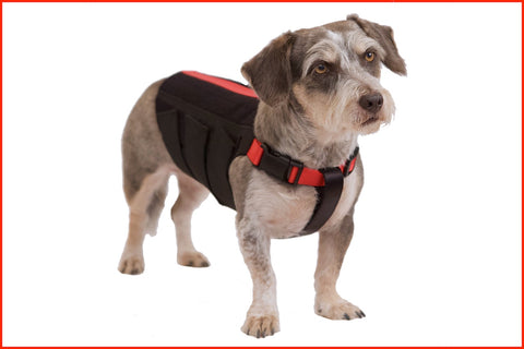 Wiggleless dog back brace,Canine Orthocare,Dogs with IDVD,Back_Bracer.
