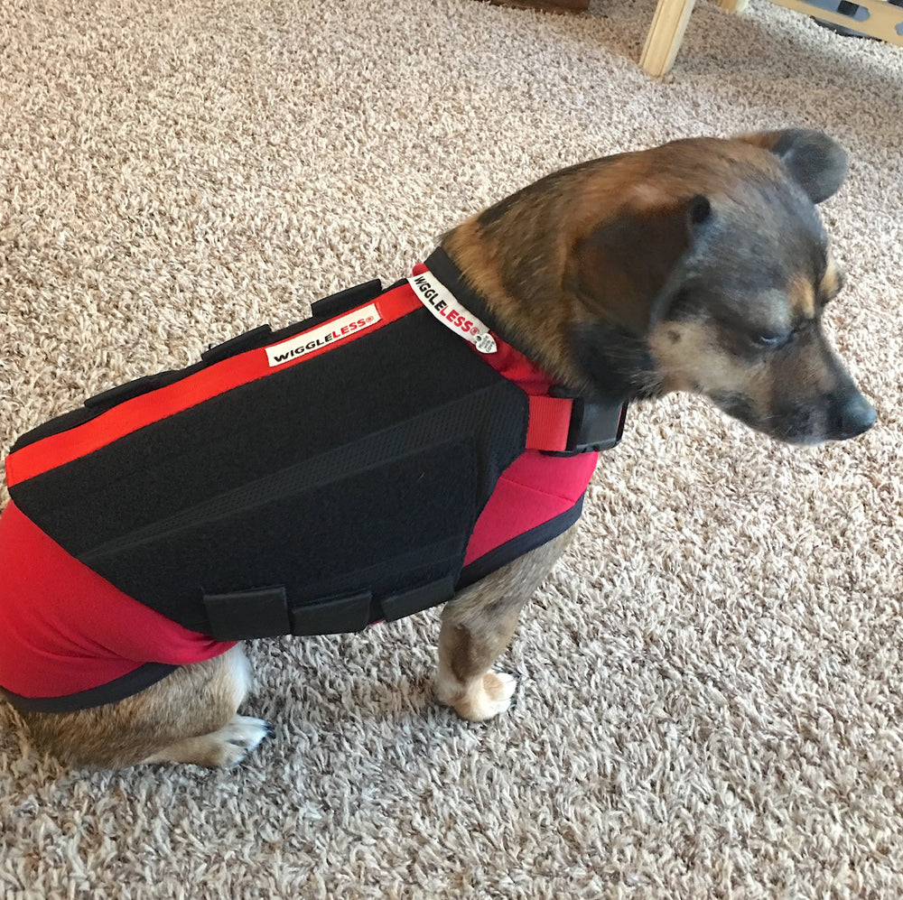 WiggleLess Dog Back Brace, Helping you to help your dog!