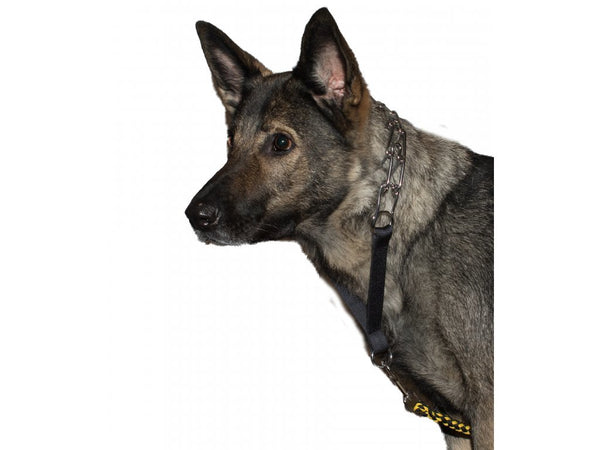 Tracking Training Collar by Jürgen Essers - Dog Sport Supply Company