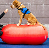 FitPAWS®-Peanut (Peanut, DVD, Pump) - Dog Fitness & Canine Rehab Equipment - Dog Sport Supply Company