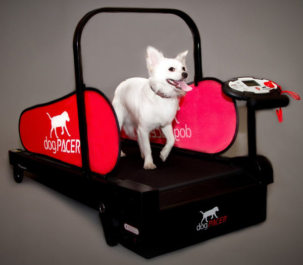 dogPacer MiniPacer Treadmill & Free Shipping - Dog Sport Supply Company