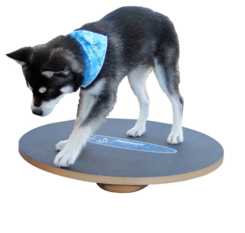 FitPAWS® Wobble Board 20 - Dog Fitness & Canine Rehab Equipment - Dog Sport Supply Company