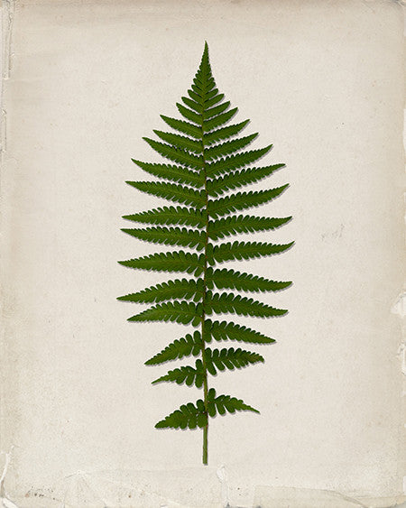 Vintage Fern Leaf Print - IndustrialPrints