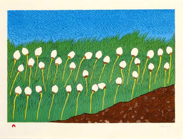 2013 COTTON GRASS by Nicotye Samayualie