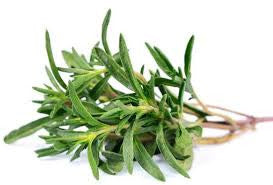 Thyme (White) thymus vulgaris essential oil