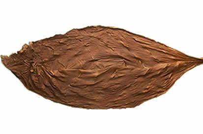 Everything You Need to Know About Fronto Leaf
