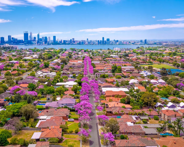 Jacarandas colouring Perth
