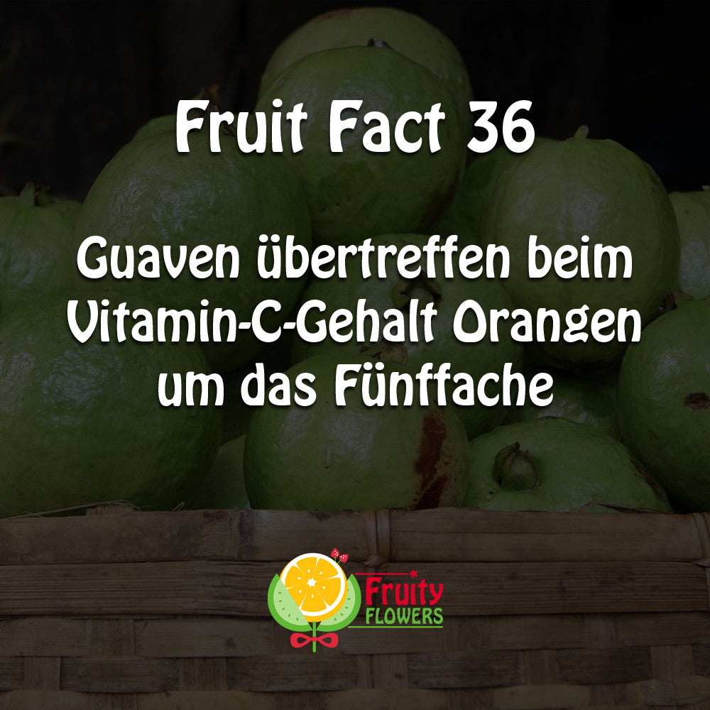 Fruit Fact Guave