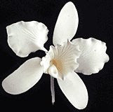 Cattleya Single - Small White 50 Count
