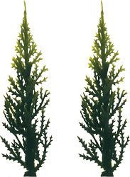 Evergreen (Variegated) Tree - 144 Count