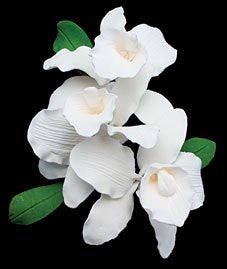 Cattleya Spray (New) - White 6 Count