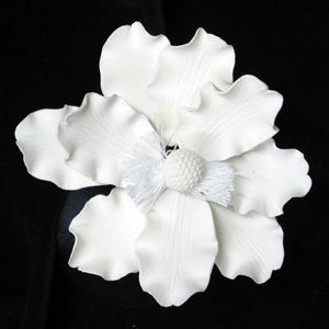 Anemone - White Only 8 Count